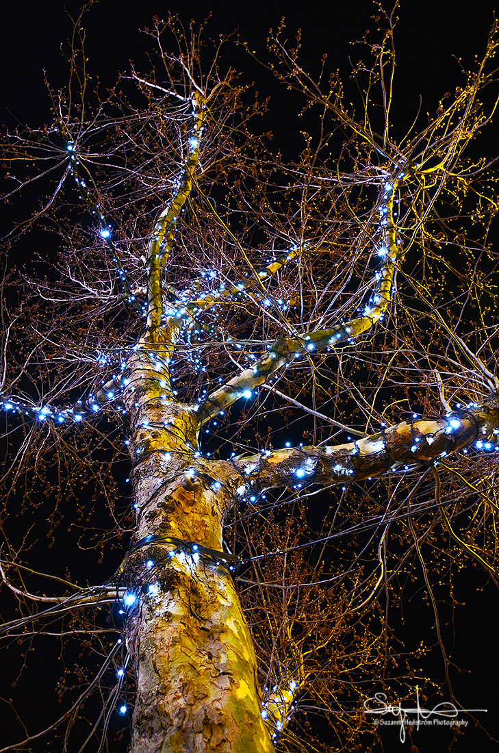Tree lights Amsterdam