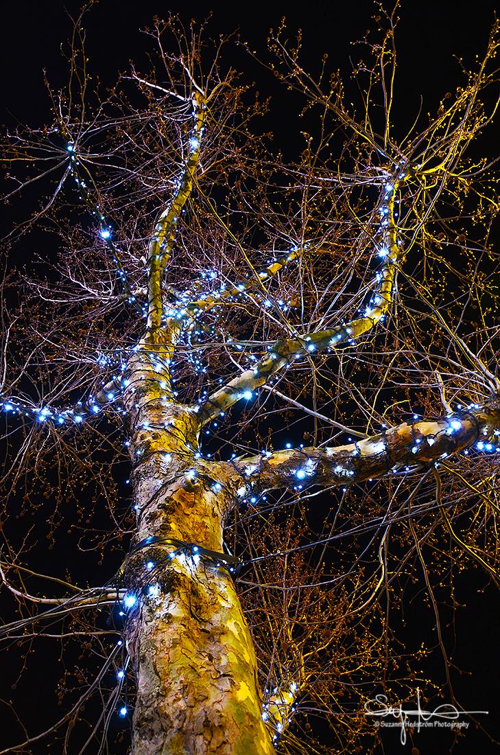 Tree lights Amsterdam